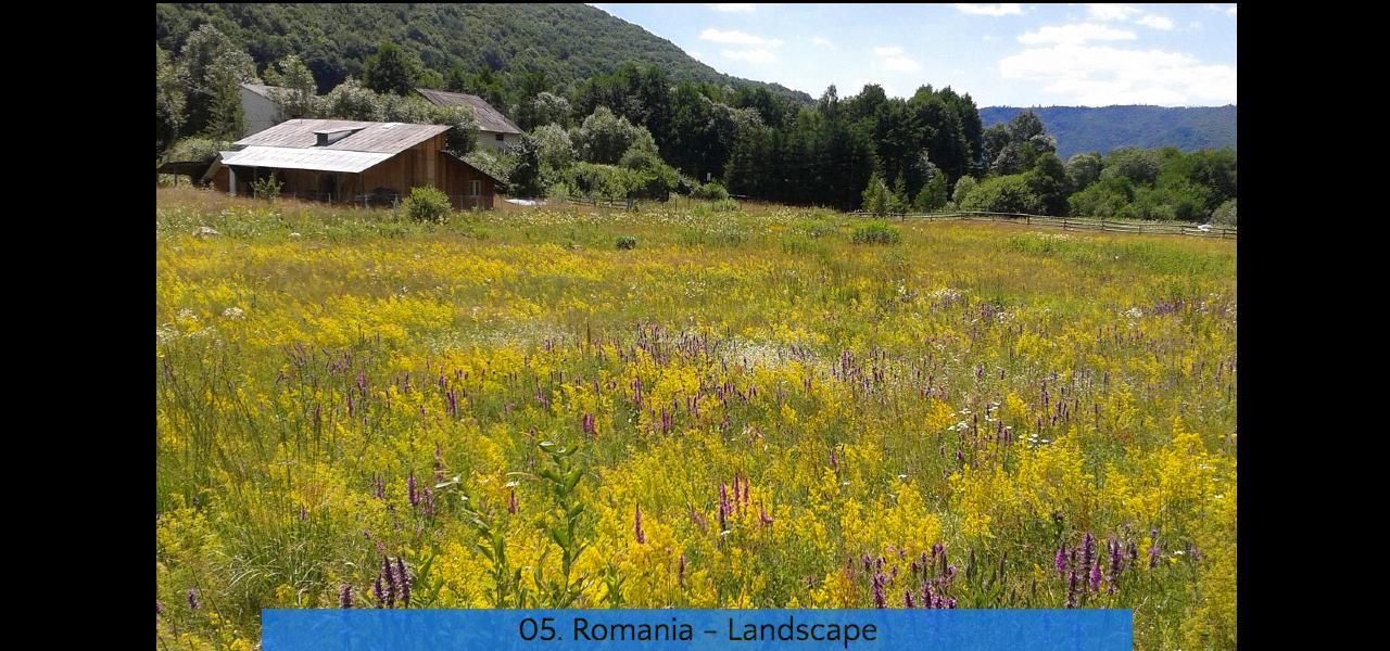 05. Romania Landscape